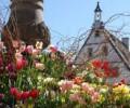 Découvrez l'Alsace au Printemps